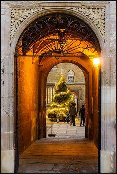 Bodleian Library Christmas tree, Oxford