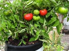 Veggies and You – Tips For Gardeners