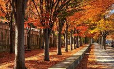 Princeton, NJ, #ridecolorfully, #katespadeny and #vespa