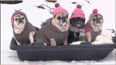 Pre-caffeine tech: Moon marvel, pugs on a sled!