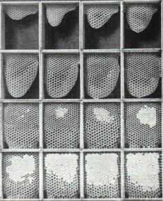top bar hive comb formation