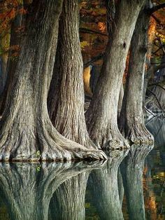 Reflection of cypress trees in the Frio River, Texas, USA