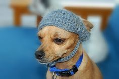 Free Crochet pattern - Dog Visor with worked in tie.
