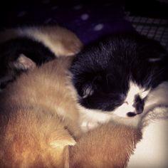 So tiny <3 cat lover, kitti heaven