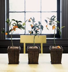 Grow your own citrus trees indoors. I need to try this.