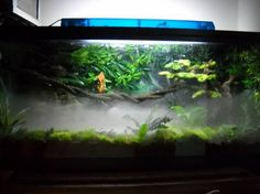 Crested Gecko and his awesome setup!!!! - Vivarium Forums
