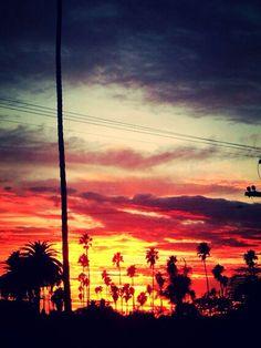 Venice CA 2014