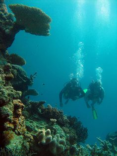 Scuba dive the Great Barrier Reef.