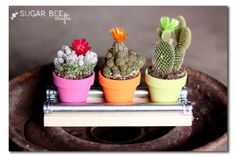 Bright and colorful mini DIY mini cactus. Follow the simple instructions for a great handmade gift. #teacher #appreciation #gift
