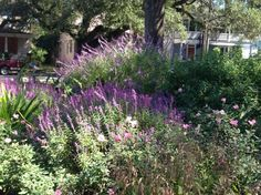 Head to Allan Park this fall for a fabulous flora display! #Charleston