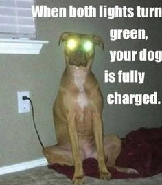 """When both lights turn green, your dog is fully charged."" ~ Dog Shaming shame - - Funny Pictures Of The Day – 101 Pics"