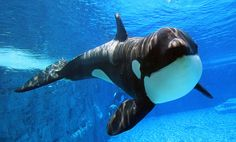 orca's <3