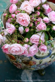 """Rosebush """"The Fairy"""" has these sweet blooms all summer."""