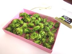 D I Y - Boutonniere Hops for Weddings - 40 Dried Hops Flowers - Purchase Direct from the Hops Farm on Etsy, $10.00