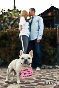 Dog save the date picture. Omg... French bulldog along with a marriage I think I'm in heaven.... Propose to me with a French bulldog puppy and I just might die!!!