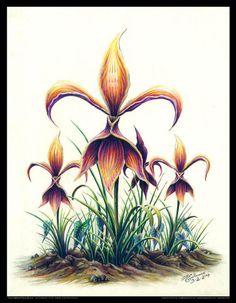 Natural Fleur de Lis - Color Pencil and Pen by Louisiana Artist Jon Guillaume