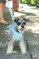The Ring Bearer can be a boy, girl or even a pet! Suit yourself to make your wedding uniquely yours.   http://ncweddingministerblog.blogspot.com/2010/09/about-ring-bearer-and-flower-girl.html