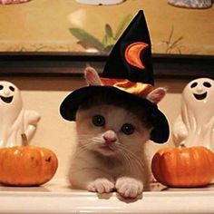 What a cutie...trick or treat