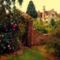roses on old stone wall & gate  #garden