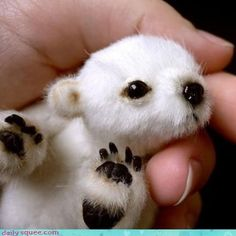 New born baby polar bear