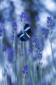 The Taste of Lavender by Marzena Wieczorek
