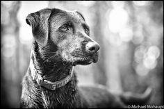 Lila the lookout by Mohaupt Photo, via Flickr