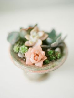 A pink succulent! Have you ever seen one like this?! Beautiful!