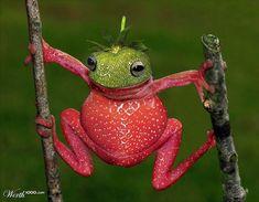 Strawberry Frog #photomanipulation