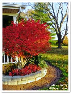 Burning bush. Looks like a small tree so you can add under plantings.