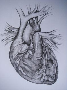 See a human heart beat..