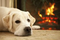 4 Reasons You Need A Fireplace Mantel In Your Home http://www.mantelsdirect.com/mantel-blog/4-Reasons-You-Need-A-Fireplace-Mantel-In-Your-Home