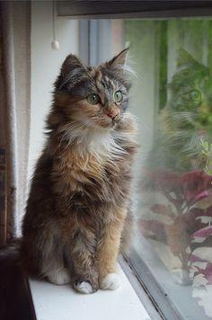 gato, cats, internet cat, kitti committe, coloring, bitti kitti, kittens, kitty, fall beauty
