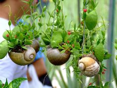 Hanging succulent plants in shells