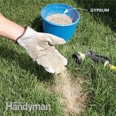 Step by step from March to snow fall - lawn care tips for a perfect green lawn.