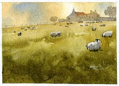 Scots Sheep 1 by Iain Stewart Watercolor ~ 5 x 7