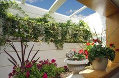 Basement mini pit greenhouse