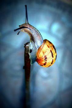 Snail by Austen Haines