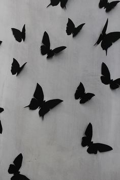 Butterflies installation