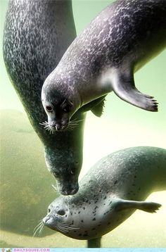 Seal Posers   # Pin++ for Pinterest #