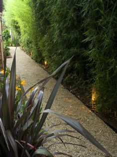 hedg, privacy screens, paths, landscape architecture, side yards, landscape designs, garden, shades of green, yard ideas