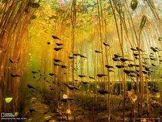 Underwater photographer Eiko Jones was shooting a colony of water lilies when a school of tadpoles rushed in, completing this breathtaking photograph that won a recent National Geographic award.