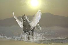 Pegasus (For Sale)