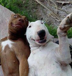 #Dog selfie smiling