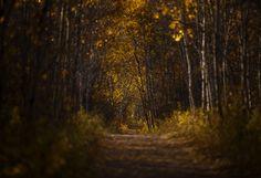The Golden Road by Stuart Deacon on 500px