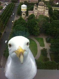 bird photobomb
