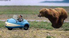 funny animals, cat, funni, baby animals, funny animal photos