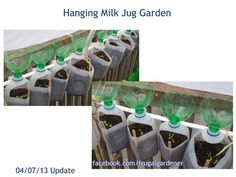 Hanging Milk Jug Garden. I could see strawberries this way.