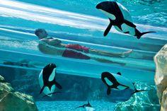 Aquatica: Sea World's Water Park Orlando FL