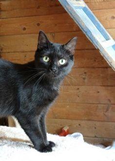 Hugo est un mâle noir, né en octobre 2012. Il a été abandonné suite au placement de sa maitresse en maison de retraite. Vagabond & Co (Nord)