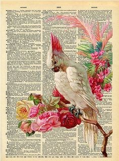 hipster cockatoo